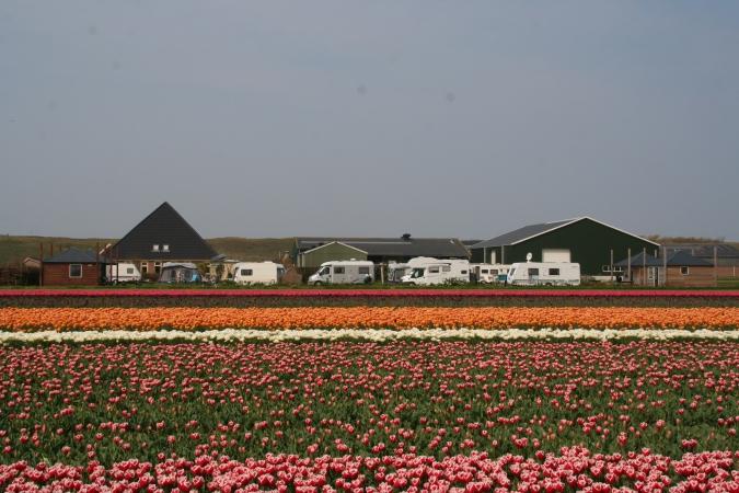 midden in de bloembollenvelden NL-kamperen